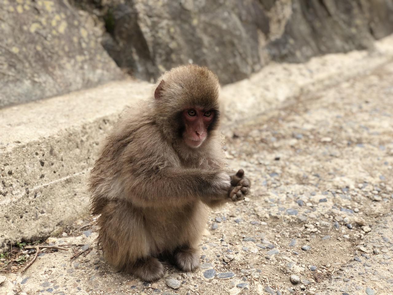 長野県「地獄谷野猿公苑」で猿を見て白馬村へ向かう